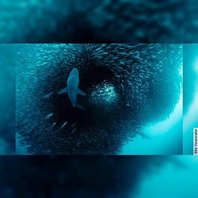 ABENTEUER OZEAN - Geheimnisse der Weltmeere