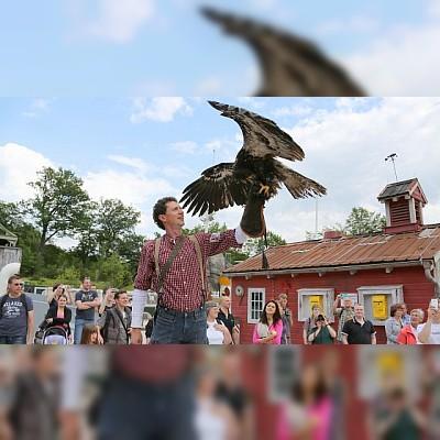 Zoo Hannover - Tagesticket Sommersaison (berechtigt zum einmaligen Eintritt des Zoos in der Zeit vom 17.03.2018 bis 28.10.2018)