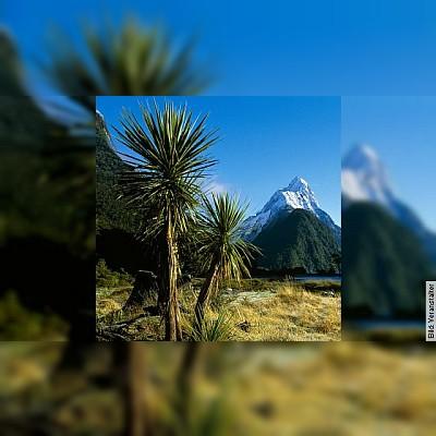 Neuseeland - Von Aussteigern und Kiwis
